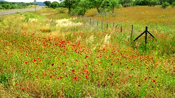 Wildflowers with Fence